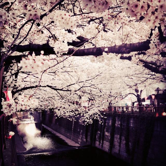 美容 院 sakura